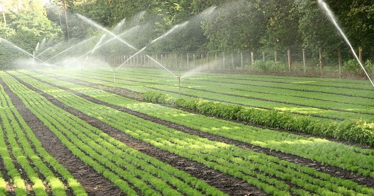 Smart water saving ways and irrigation systems for your lawn - Ways saving water watering garden ...